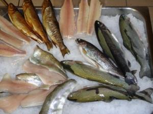 verschiedene Fische
